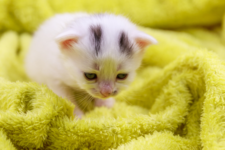 Small kitten in a yellow terry blanket Stock Photo