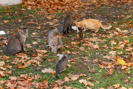 Stray cats eating food in autumn city park Stock Photo