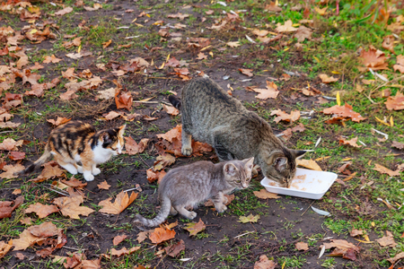 Stray cats eating food in autumn city park 写真素材