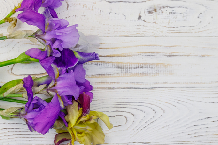 Bouquet of colorful iris flowers on a white wooden background. Top view, copy space