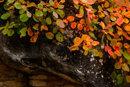 Beautiful colorful tree on the top of rock at autumn Stock Photo