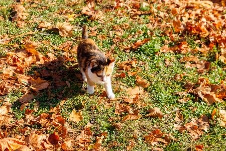 Cat on fallen autumn leaves in the park