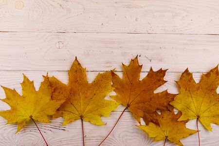 Autumn maple leaves on white wooden background. Top view, copy space