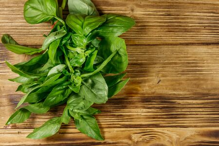 Green fresh basil on a wooden table