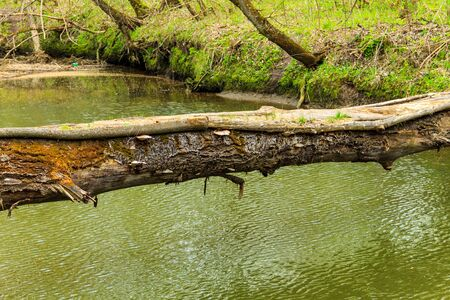 Fallen tree trunk as a bridge over a river in green forest Zdjęcie Seryjne