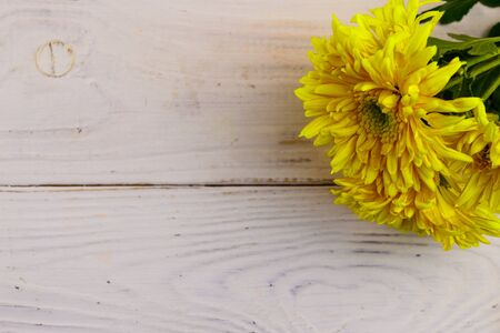 Yellow chrysanthemums on white wooden background. Top view, copy space