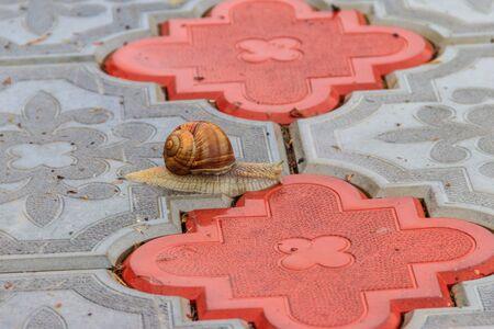 Snail crawling on a sidewalk