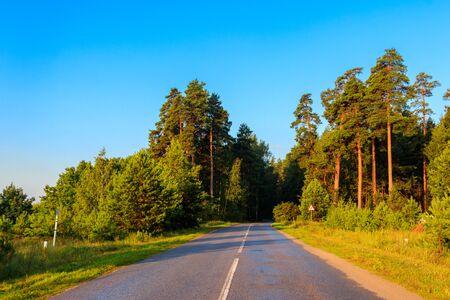 Asphalt road through green pine forest at summer