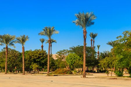 Palm trees on town square near Karnak temple complex in Luxor, Egypt