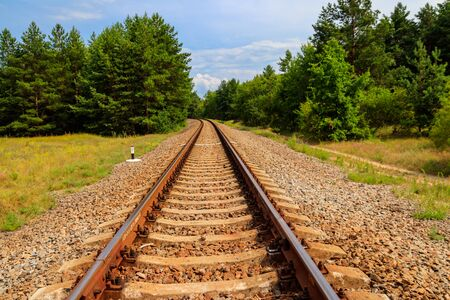 Binario ferroviario attraverso una verde pineta