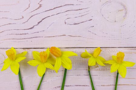 Yellow daffodil flowers on white wooden background. Greeting card for Valentines Day, Womens Day and Mothers Day. Top view, copy space Stockfoto