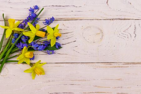 Bouquet of yellow daffodils and blue scilla flowers on white wooden background. Greeting card for Easter, Valentines Day, Womens Day and Mothers Day. Top view, copy space