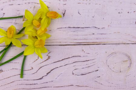 Yellow daffodil flowers on white wooden background. Greeting card for Valentines Day, Womens Day and Mothers Day. Top view, copy space Stok Fotoğraf