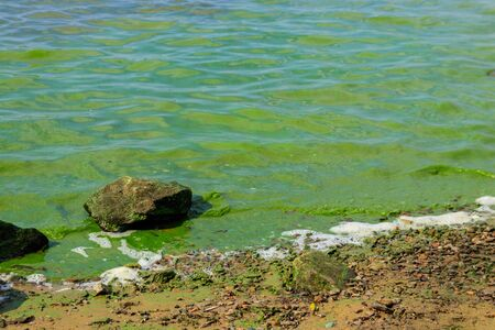 Blooming green water. Green algae polluted river 写真素材 - 133614314