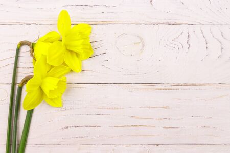 Yellow daffodil flowers on white wooden background. Greeting card for Valentines Day, Womens Day and Mothers Day. Top view, copy space 版權商用圖片