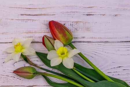 Bouquet of daffodils and red tulips on white wooden background. Greeting card for Easter, Valentines Day, Womens Day and Mothers Day. Top view, copy space