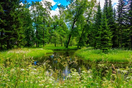 Small river in a mixed deciduous and coniferous forest in Russia. Summer landscape 写真素材 - 134842299