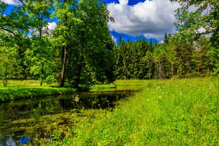 Small river in a mixed deciduous and coniferous forest in Russia. Summer landscape 写真素材 - 134842300