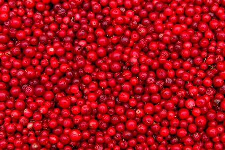Background of ripe red lingonberry (cowberry, partridgeberry)