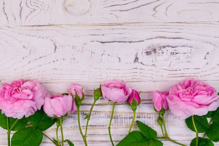 Pink roses on a white wooden background. Top view, copy space