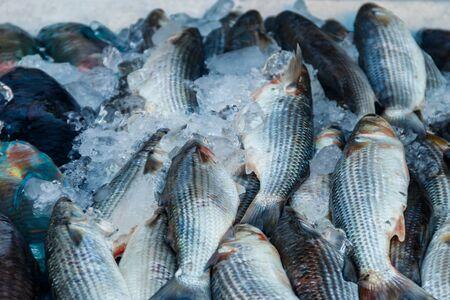 Fresh raw fish in fish market
