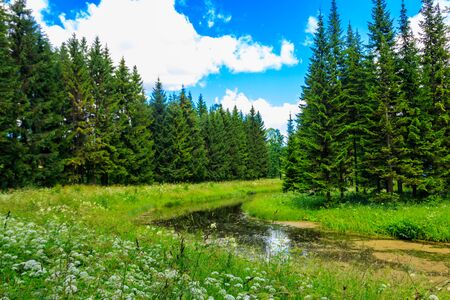 View of a small river in coniferous forest at summer