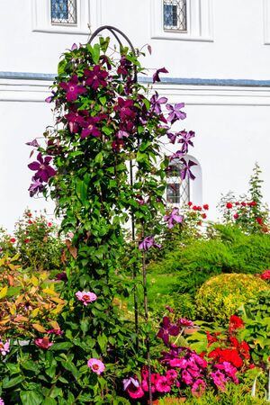 Decorative iron arch with purple clematis flowers in a garden