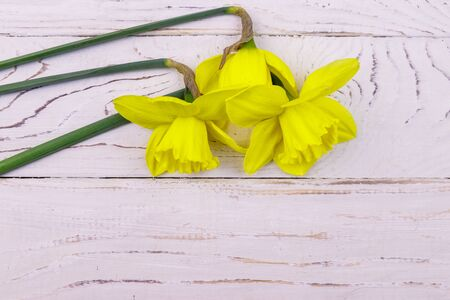 Yellow daffodil flowers on white wooden background. Top view, copy space Banco de Imagens - 140695828