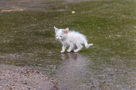 Wet stray sad kitten on a street after a rain. Concept of protecting homeless animals