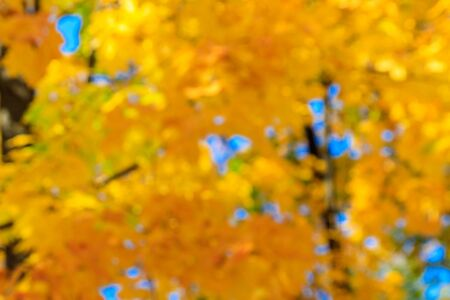 Autumn colors abstract background. Yellow blurred leaves against sky. Natural bokeh