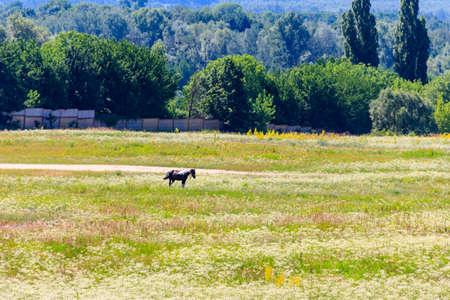 Horse grazing on a wide green meadow Standard-Bild