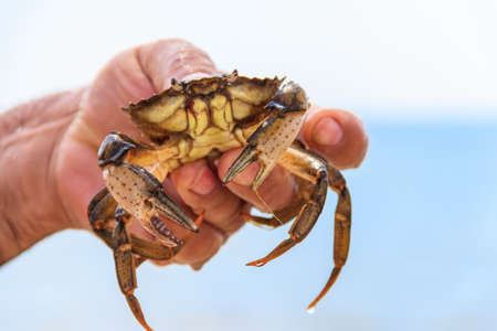 Live crab in a male hand