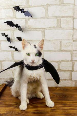 Beautiful cat wearing in Halloween bat costume