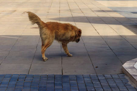Stray disabled dog without one leg on a city street
