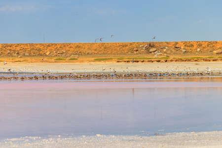 Flock of birds on the pink salty Syvash lake in Kherson region, Ukraine