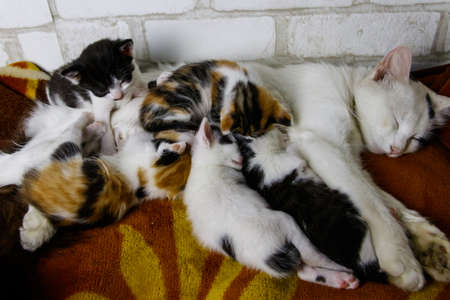 Mother cat with her kittens on a bed
