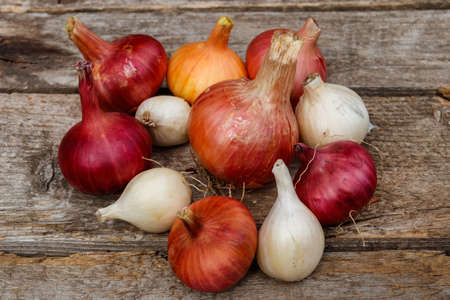 Various onion on a rustic wooden table 写真素材