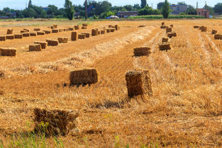 Rectangular straw bales on a field after the grain harvest 写真素材