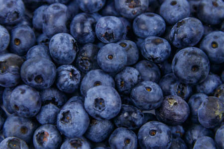 Background of the fresh blueberries