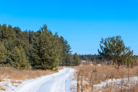 Snowy rural road in the pine forest at winter Archivio Fotografico