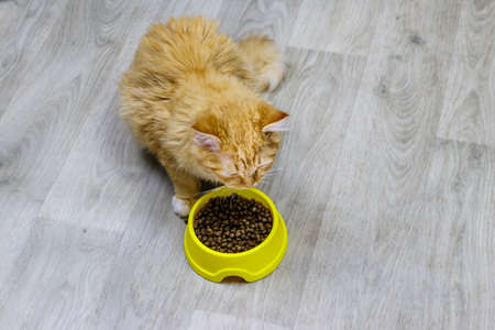Cute cat eating his food from yellow plastic bowl on a floor