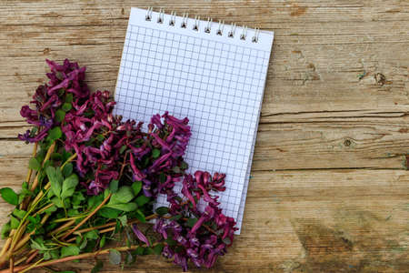 Blank notepad with purple corydalis flowers on rustic wooden background. First spring flowers. Greeting card for Valentine's Day, Woman's Day and Mother's Day. Top view, copy space