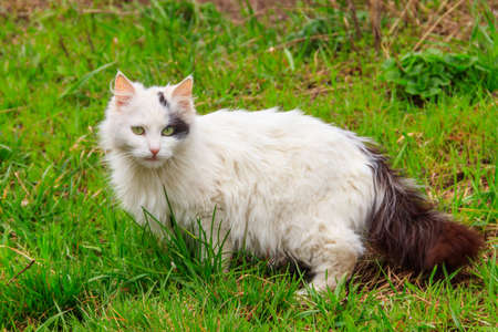 Cute cat in green grass on a meadow