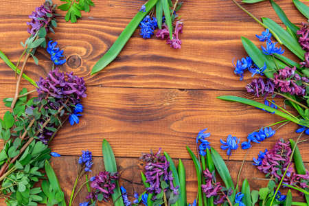 Bouquet of purple corydalis flowers and blue scilla flowers on wooden background. First spring flowers. Greeting card for Valentine's Day, Women's Day and Mother's Day. Top view, copy space Banque d'images