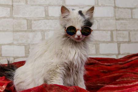 Portrait of a beautiful cute fluffy cat wearing sunglasses