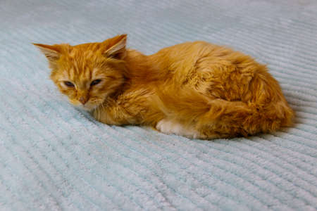 Ginger cat on a bed at home 免版税图像