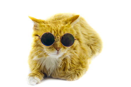 Portrait of a beautiful cute fluffy ginger cat wearing sunglasses on white background Banco de Imagens