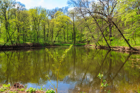 View of a beautiful lake in a green forest