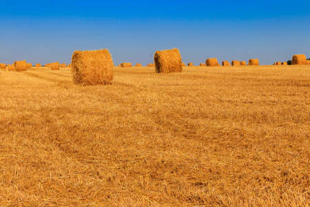 Round straw bales on a field after the grain harvest 免版税图像