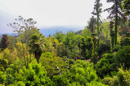 Beautiful view of Batumi botanical garden, Georgia 免版税图像
